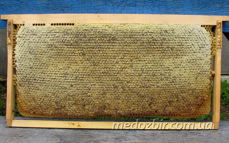 фото рамка с медом